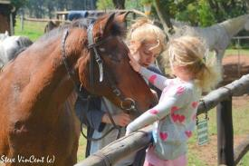 Horse-Battle-Axe-being-patted-by-child-2