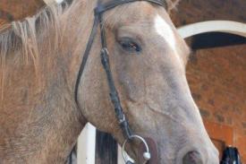 Horse-Milano