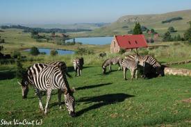 Zebra-Jan-2012-4-2