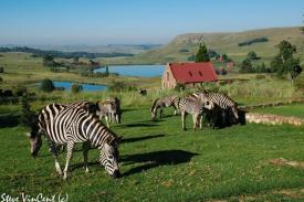 Zebra-Jan-2012-5-2